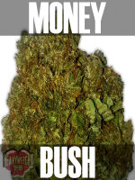 Heavyweight Seeds - Money Bush Feminised Cannabis Seeds