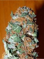 Mr Nice - Master Kaze Regular Cannabis Seeds