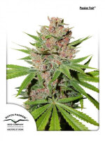 Dutch Passion - Passion Fruit Feminised Cannabis Seeds