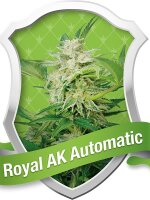 Royal Queen - Auto Royal AK Automatic Feminised Autoflowering Cannabis Seeds