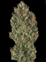 Serious Seeds - Serious Kush 6 Feminised Cannabis Seeds