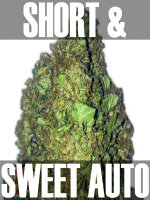 Heavyweight Seeds - Short and Sweet Auto Feminised Cannabis Seeds