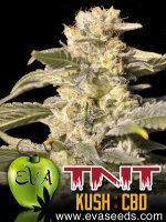 Eva Seeds - TNT Kush CBD Feminised Cannabis Seeds