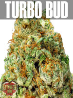 Heavyweight Seeds - Auto Turbo Bud Feminised Autoflowering Cannabis Seeds