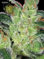 Vision Seeds - Gouda's Grass Feminised Cannabis Seeds