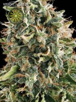Vision Seeds - White Widow Feminised Cannabis Seeds