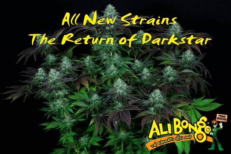 All New Tasty Genetics | Return of Darkstar